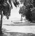 Doorkijk langs bomen en een weg naar de berg Moria (Moré) in Galilea, Bestanddeelnr 255-3195.jpg