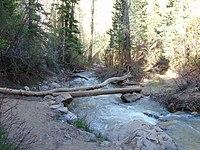 Down Peteetneet Creek from Grotto Falls Trail, May 16.jpg