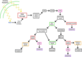 Downstream molecules and effects following DNA damage due to ionizing radiation.webp