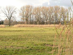 Drömling - Drömlingswiesen mit typischen Pappelreihen  bei Wolfsburg-Vorsfelde