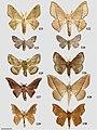 Druenticinae (10.3897-zookeys.815.27335) Figures 121–130.jpg