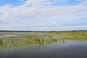Drużno - Drużno Lake