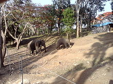 Dubare elephant camp.jpg