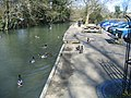 Ducks at Burford - geograph.org.uk - 553931.jpg
