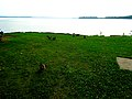 Ducks in Warner Beach - panoramio.jpg