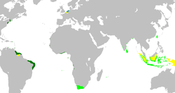 A map of the Dutch colonial empire. Light green: territories administered by or originating from territories administered by the Dutch East India Company; dark green: the Dutch West India Company. In yellow the territories occupied later, during the 19th century.