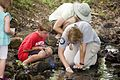 Each summer one of the most popular programs at Hungry Mother State Park is the Critter Crawl where the participants investigate what lives in a creek at the park. - AA (19093154216).jpg