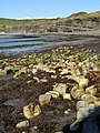 East end of Kimmeridge Bay beach - geograph.org.uk - 768360.jpg