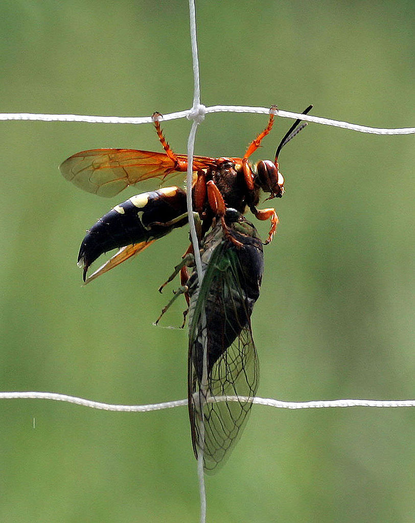 Deadly African Fly  Letters