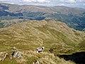 Eastern slopes of High Raise - geograph.org.uk - 49649.jpg