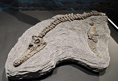 Edgarosaurus