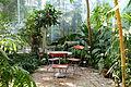 Edvard Anderson Conservatory - Bergianska trädgården - Stockholm, Sweden - DSC00433.JPG