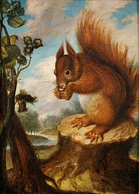 Eichhörnchen mit Nuss