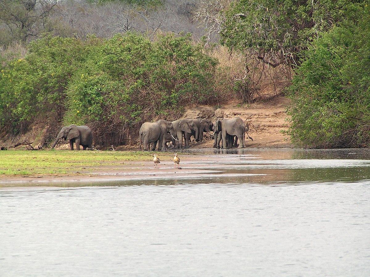 Tolvaring dodad av elefant