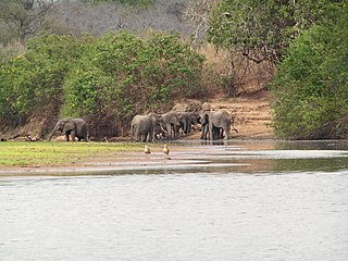 Selous Game Reserve World Heritage Site in Tanzania, East Africa