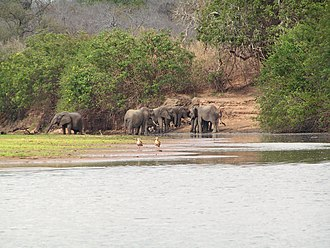 Selous Game Reserve - Elephants in the Selous Game Reserve