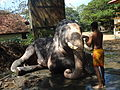 Elephant Bath 1.JPG