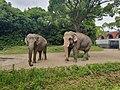 Elephants at Zoorasia.jpg