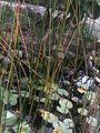 Estanque en Jardín Botánico en El Charco del Ingeniero.JPG