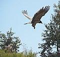 Ethiopian Bird-Stravaganza (2462671717).jpg