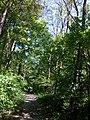 Eure-Et- Loir Droue-Sur-Drouette Sentier De La Vallee GR20 Saint Jacques De Compostelle 08072016 - panoramio.jpg