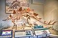 FMNH Stegosaurus.jpg