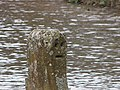 Face at Felin Newydd Falls - geograph.org.uk - 651836.jpg