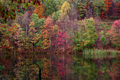 Fall-winecellar-lake - West Virginia - ForestWander.png