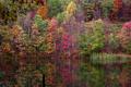 Fall-winecellar-lake - West Virginia - ForestWander.png