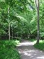 Far Markhams - ancient woodland at Top Lodge - panoramio.jpg