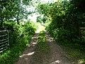 Farm track near Ardwall - geograph.org.uk - 1418418.jpg