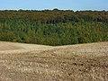 Farmland and woodland, Chinnor - geograph.org.uk - 1014069.jpg