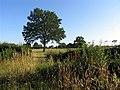 Farmland near Tadley - geograph.org.uk - 28468.jpg