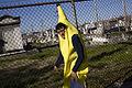 Fat Tuesday Banana Man.jpg