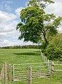Field boundary near Hemphill - geograph.org.uk - 177898.jpg
