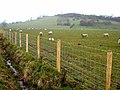 Field with sheep - geograph.org.uk - 759345.jpg