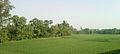 Fields near Ravikampadu.jpg