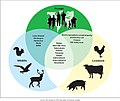 Figure 3- Examples of Zoonotic Diseases and Their Affected Populations (6323431516).jpg