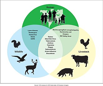 Possibilities for zoonotic disease transmissions Figure 3- Examples of Zoonotic Diseases and Their Affected Populations (6323431516).jpg