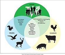 Zoonosis - Wikipedia