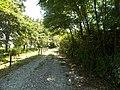 Filari di alberi intorno alla riserva.jpg