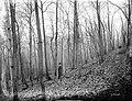 File--C5235-CC5244- Mine Brook, NJ (5adb5976-3d96-46ca-9f54-a849830631df).jpg