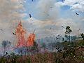 Fire hawks.jpg