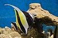 Fish at Kavaratti Aquarium (5799665573).jpg
