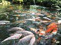 Fishes.jpg1.jpg