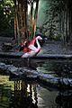 Flamingo-IMG 5564.JPG
