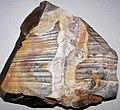 Flint (Vanport Flint, Middle Pennsylvanian; Nethers Flint Quarries, Flint Ridge, Ohio, USA) 198.jpg