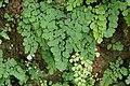 Flora of Wayanad 0112.jpg
