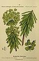 Flore coloriée de poche du littoral méditerranéen de Gênes à Barcelone y compris la Corse (6243950223).jpg