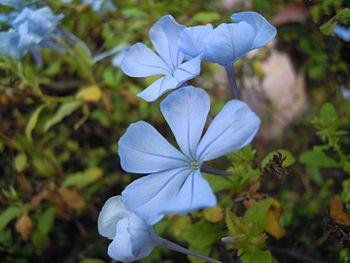 Flower-Name unknown.jpg